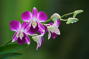 orchid houseplants